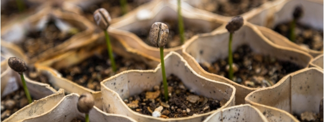 Close up pictures of sprouts growing
